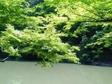 柔らかな木漏れ日