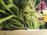 新鮮なお野菜達