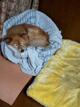 ベッド2種