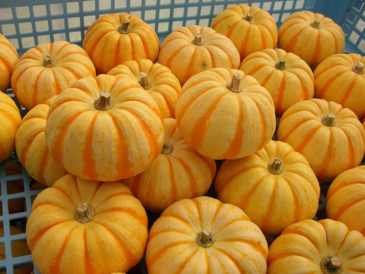 COOKPADで見つけた激ウマかぼちゃレシピ・1