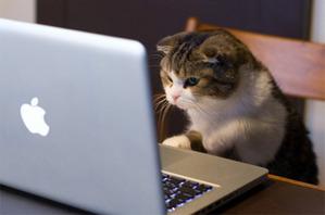 パソコンで勉強をする猫