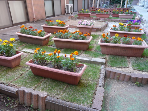 ケア中庭 お花畑