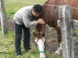 小野っちと馬