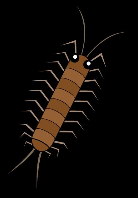centipede_a07