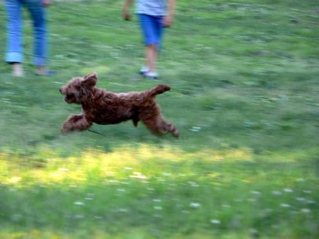走るレオン