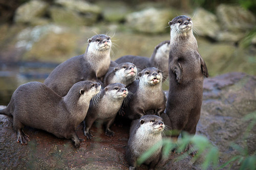 london-zoo-otter1