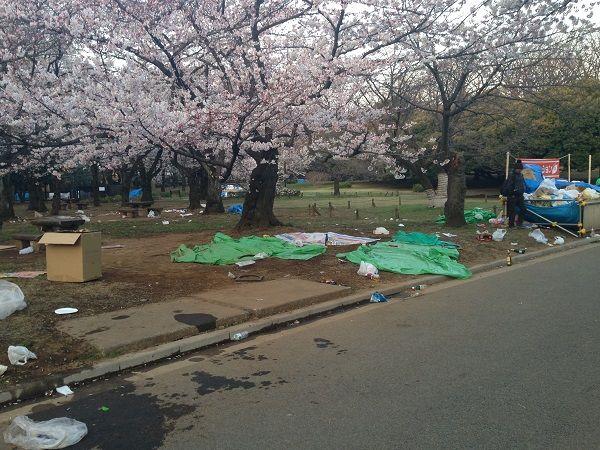 日本人よ恥を知れ!せっかくの桜が台無し!