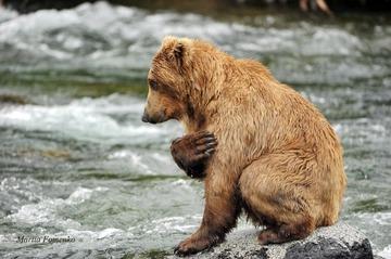 zhivotnoe-medved-hischnik