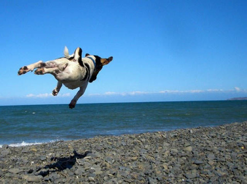 25-funniest-hover-animals-ever_001