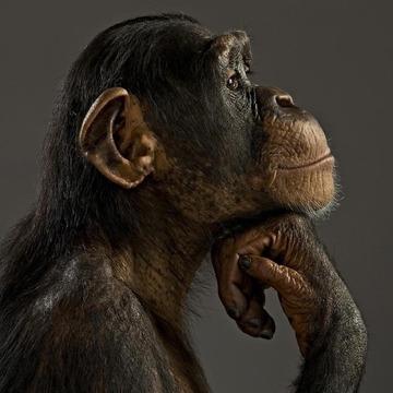 瞑想動物ポスター
