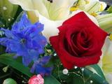 最高に美しいお花であります!