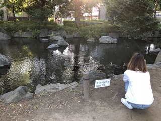 東綾瀬公園の鴨