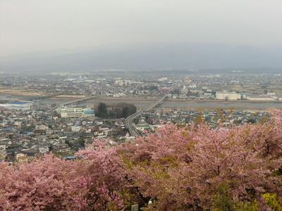 まつだ桜_003