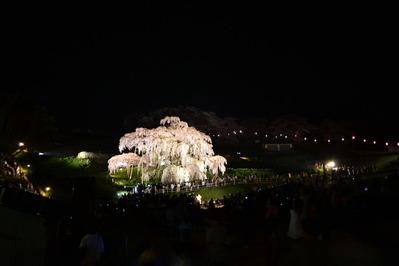 三春の滝桜_003