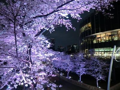 東京ミッドタウン_桜
