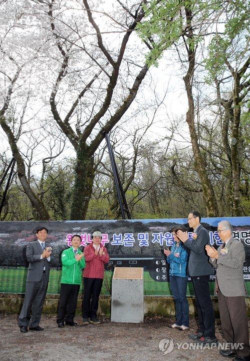 韓中日の原産地論争、王桜(染井吉野)は「済州産」 〜100年以上続く議論やめて、花を楽しもう ← DNAが違うのに認めないだけじゃん - おもしろ韓国ニュース速報