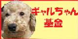 ギャルちゃん基金 (2)