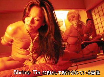 Shrimptie.jpg