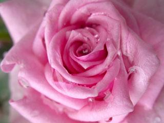 1338887792_roze