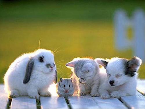 1378451668_AnimalFriend