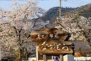 2017.4.14-秩父さんぽ-長瀞駅ホームから見る桜