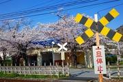 2017.4.14-秩父さんぽ-長瀞駅近くの第4種踏切から見る桜