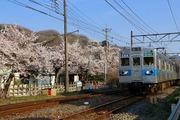 2017.4.14-秩父さんぽ-秩鉄5000系と桜