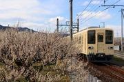 2017.3.9-梅林を行く81111F(坂戸方)