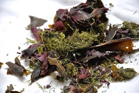seaweed-1489512_640