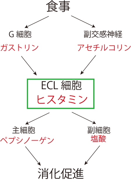 ECL-1