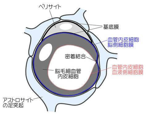 700px-Tachikawa_fig_1