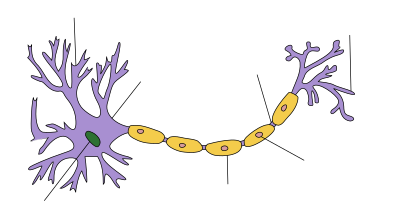 400px-Neuron_Hand-tuned.svg