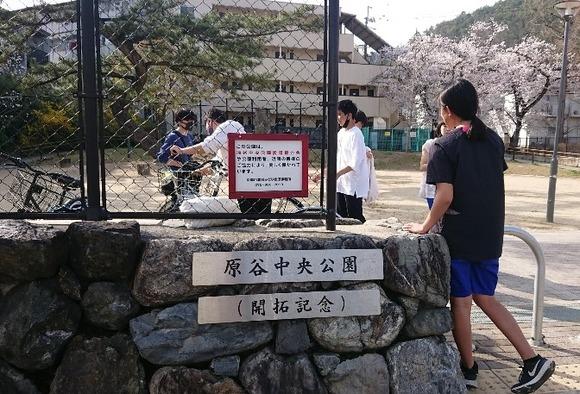 2021年3月29日原谷中央公園(開拓記念)