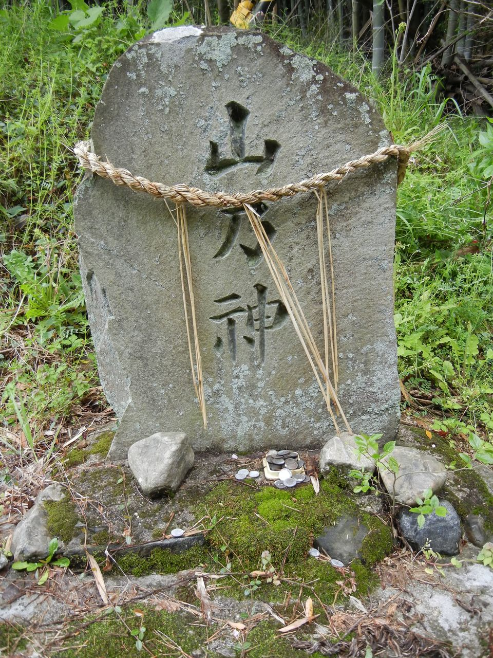 タケノコ専門卸売市場 : 歴史探訪京都から