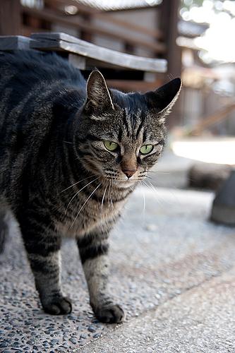 圓福寺 大可島城跡にいた猫