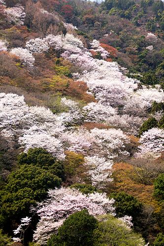 嵐山(京都)