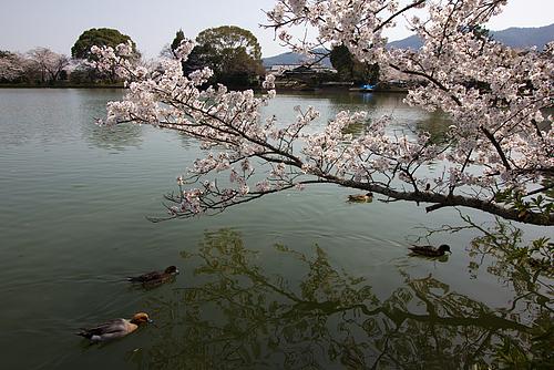 大覚寺/大沢池(京都)