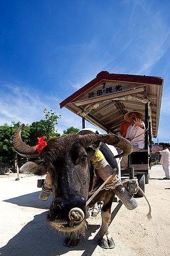 0721-108 水牛車(竹富島)