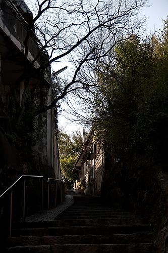 圓福寺 大可島城跡への坂道