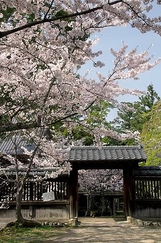 大覚寺(京都)