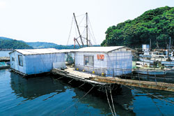 マルモ水産 海上カキ小屋