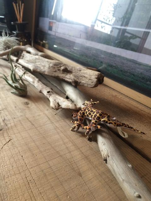 流木にトカゲ