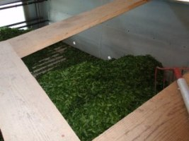 お茶工場11