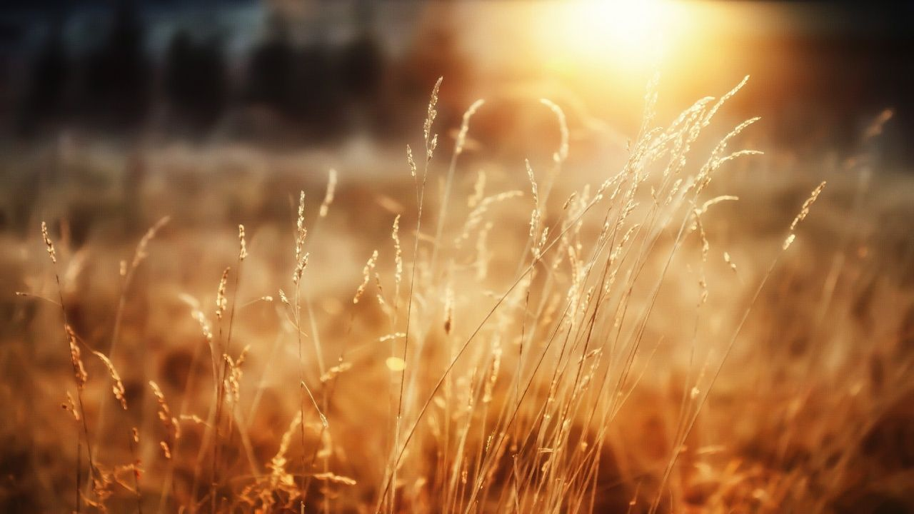 morning_sunshine-1280x720