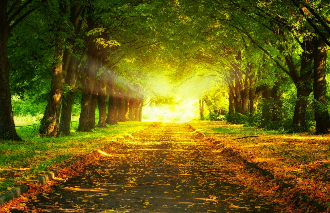 park_road-wallpaper-1152x768