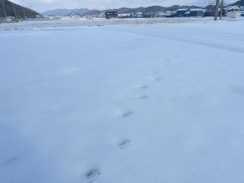 雪 鳥の足跡