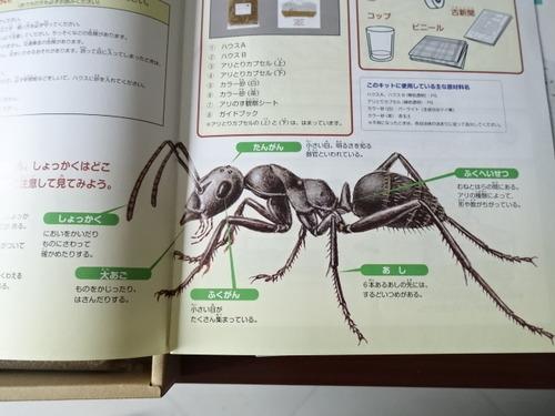 アリのす観察キット ガイドブック