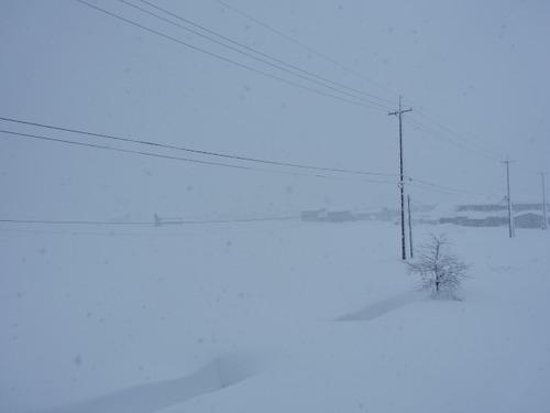 鳥取市 雪