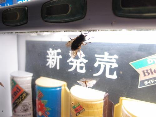 自動販売機 夜の虫