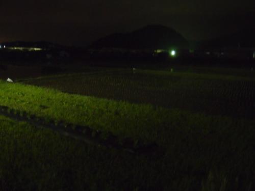 田んぼ 夜